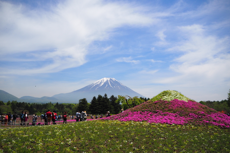 A mini Mount Fuji in front of the real thing at The Fuji Shibazakura Festival