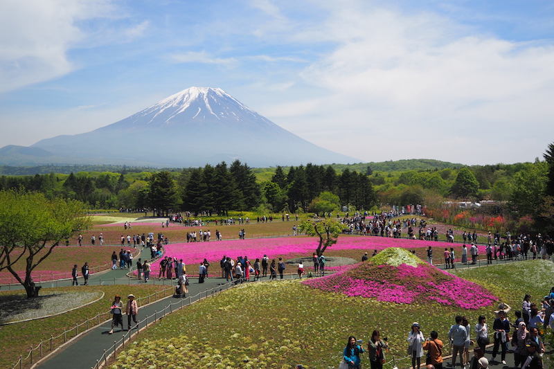 An aerial view of the Fuji Shibazakura observation deck