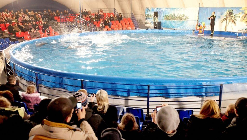 Dubai dolphinarium park